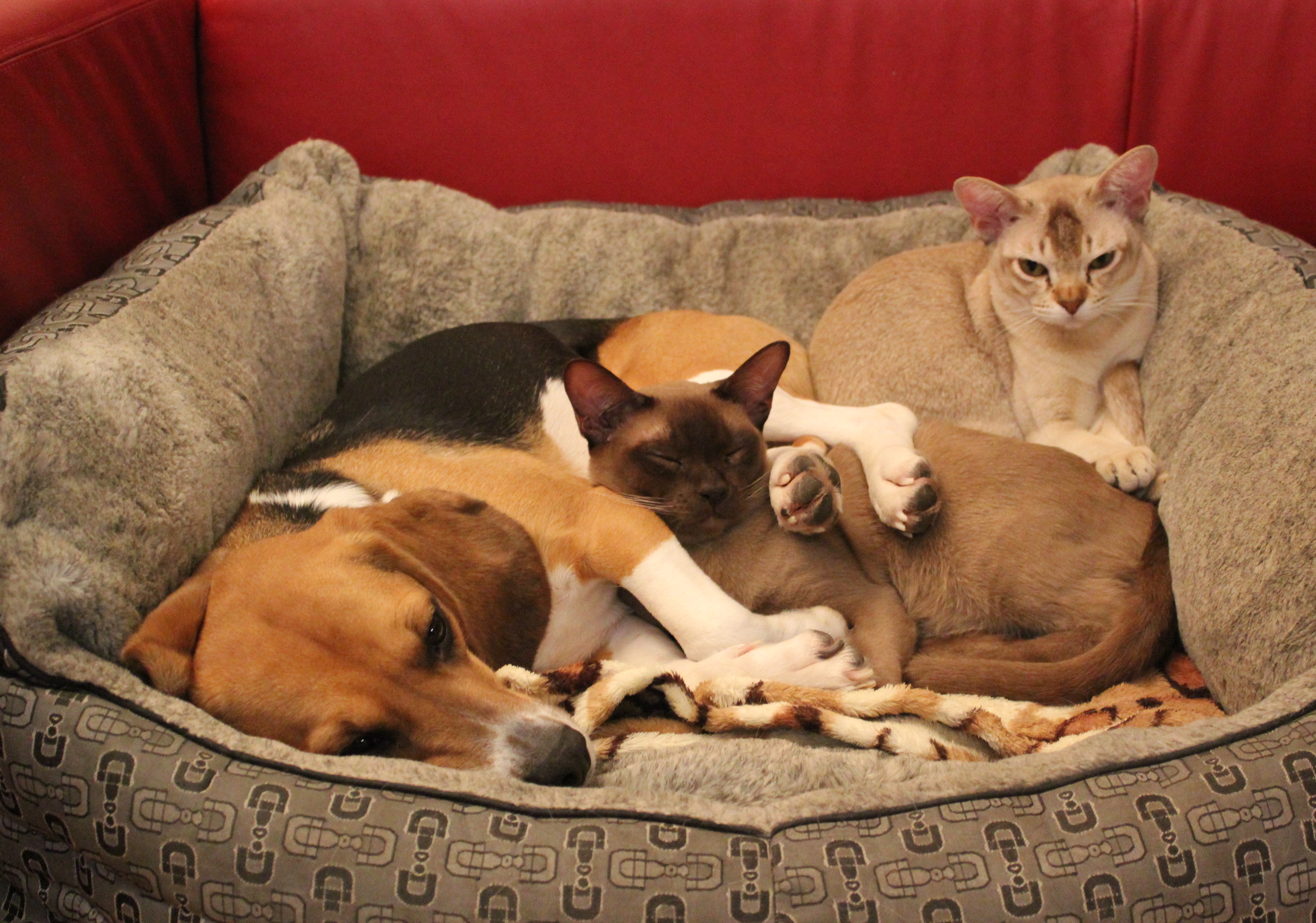 Verhaltensmedizin bei Hund und Katze