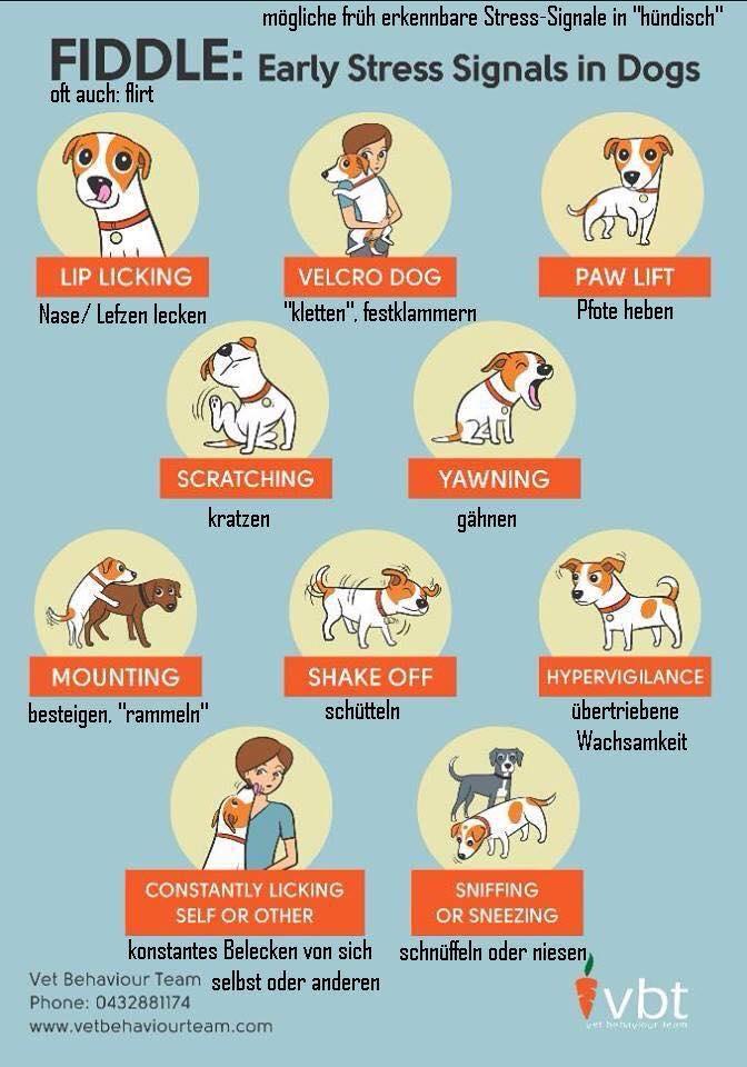 Stresssignale Beim Hund Verhaltensmedizin Bei Hund Und Katzeverhaltensmedizin Bei Hund Und Katze