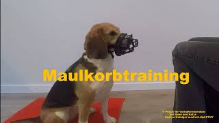 Video: Maulkorbtraining Hund