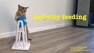 Video: Activity feeding