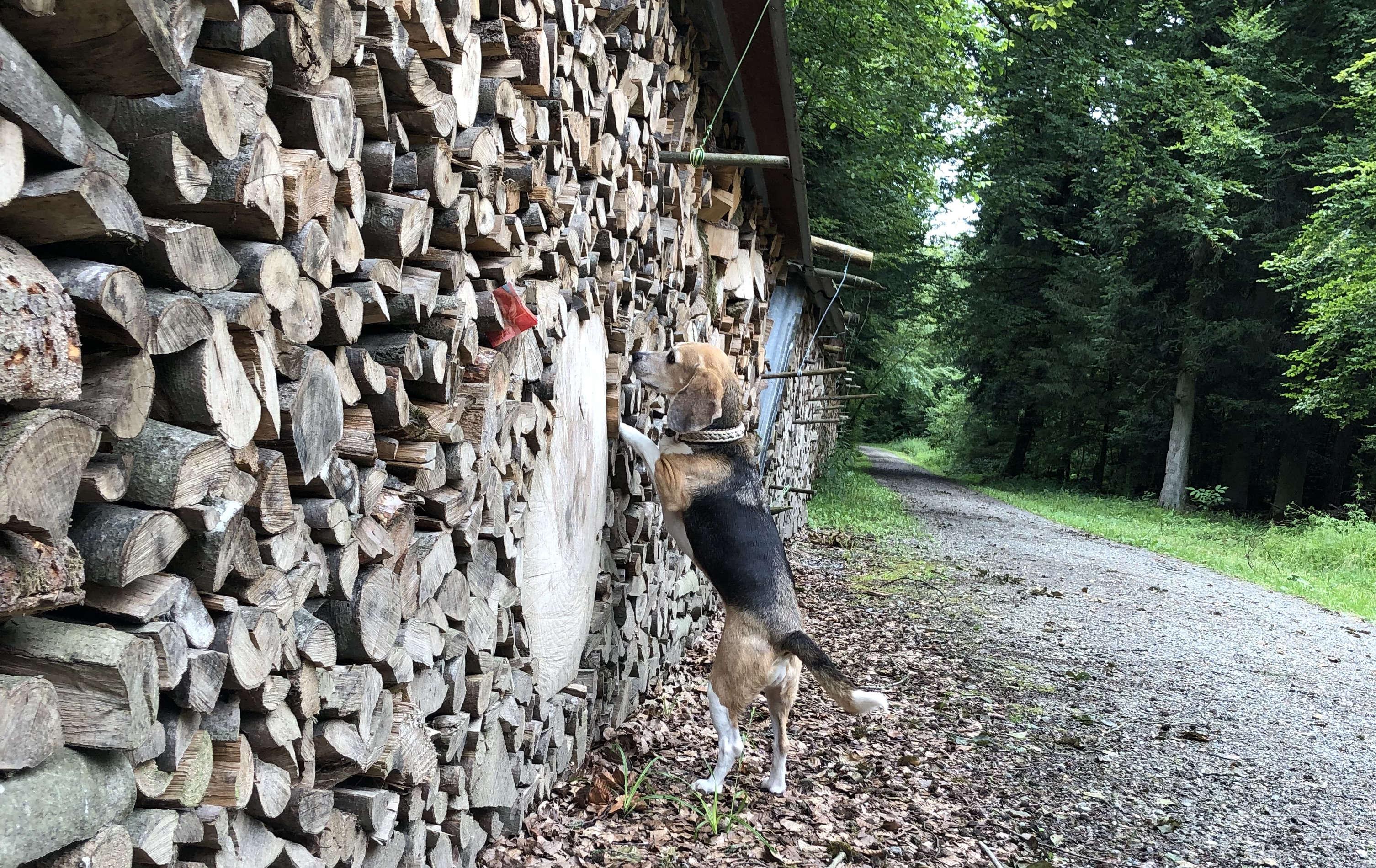Geldsuche Hund_1