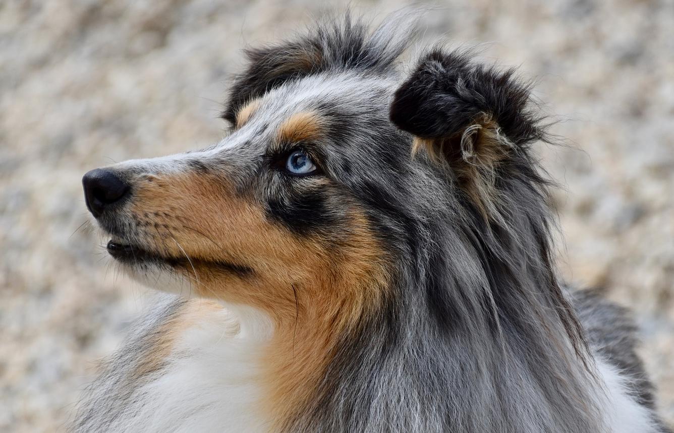 Hund Portrait